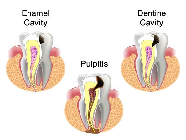 Preventive Dentistry   Howard M  Steinberg, DMD